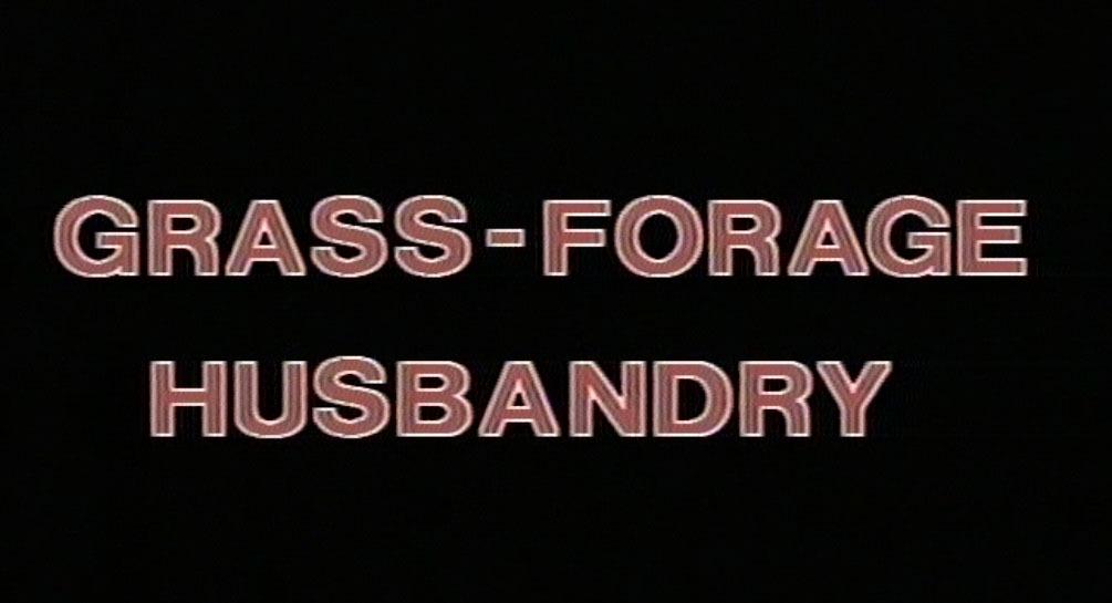 Grass-forage husbandry