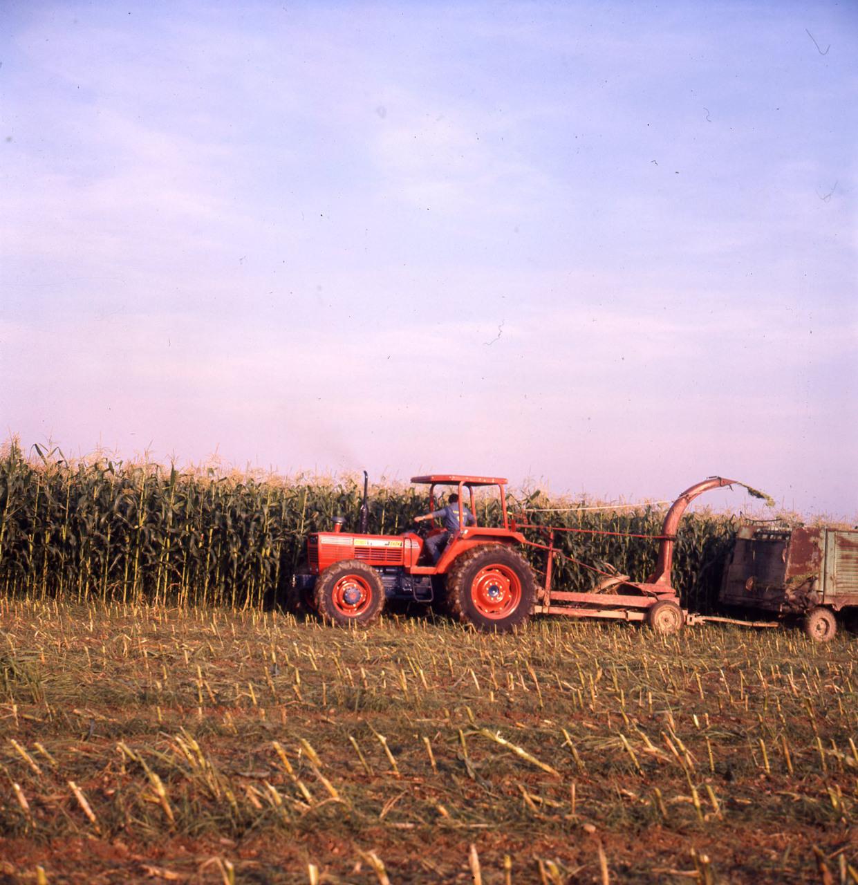 [SAME] trattore Tiger 100 al lavoro in un campo di granoturco