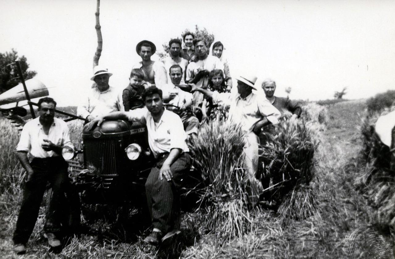 Concessionario Di Nardo - Mietitura del grano con trattore DA 38
