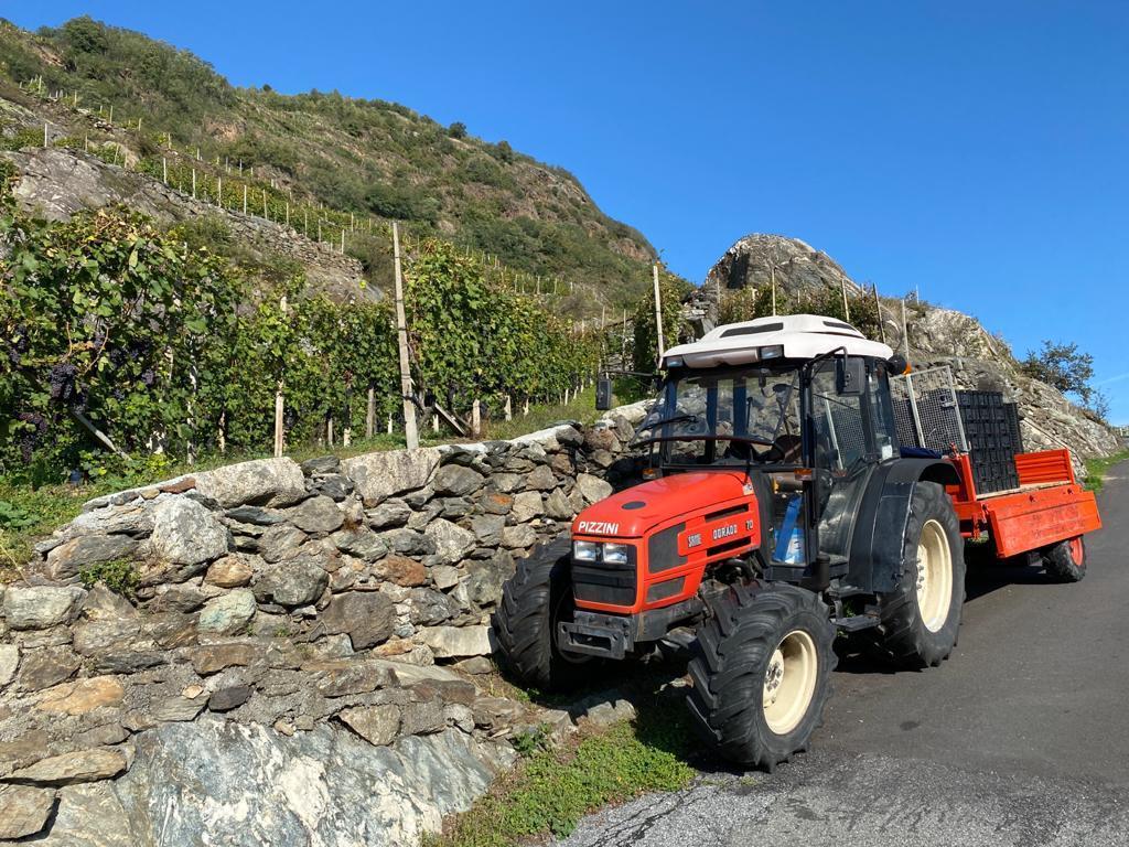 [SAME] trattore Dorado 70 durante la vendemmia in Valtellina