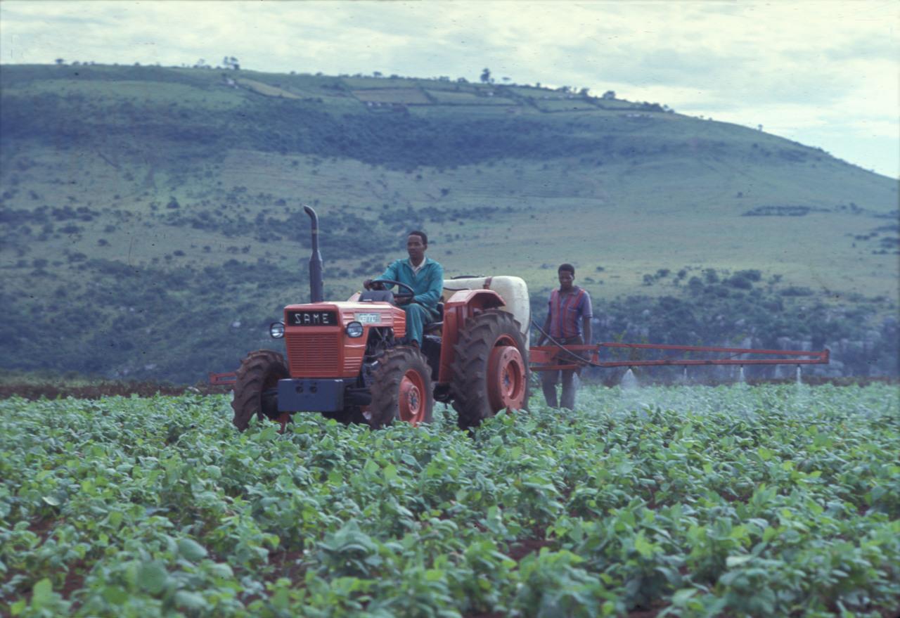 [SAME] trattore Delfino 35 al lavoro con irroratrice (Africa)