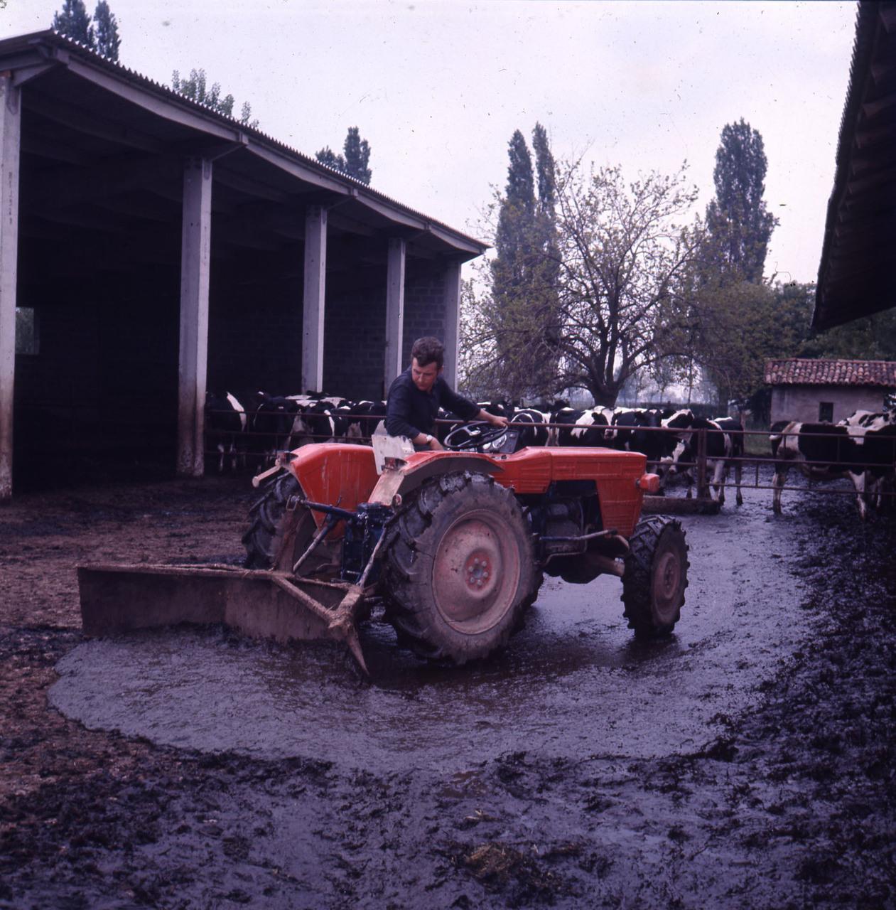 [SAME] trattore Delfino al lavoro in azienda agricola