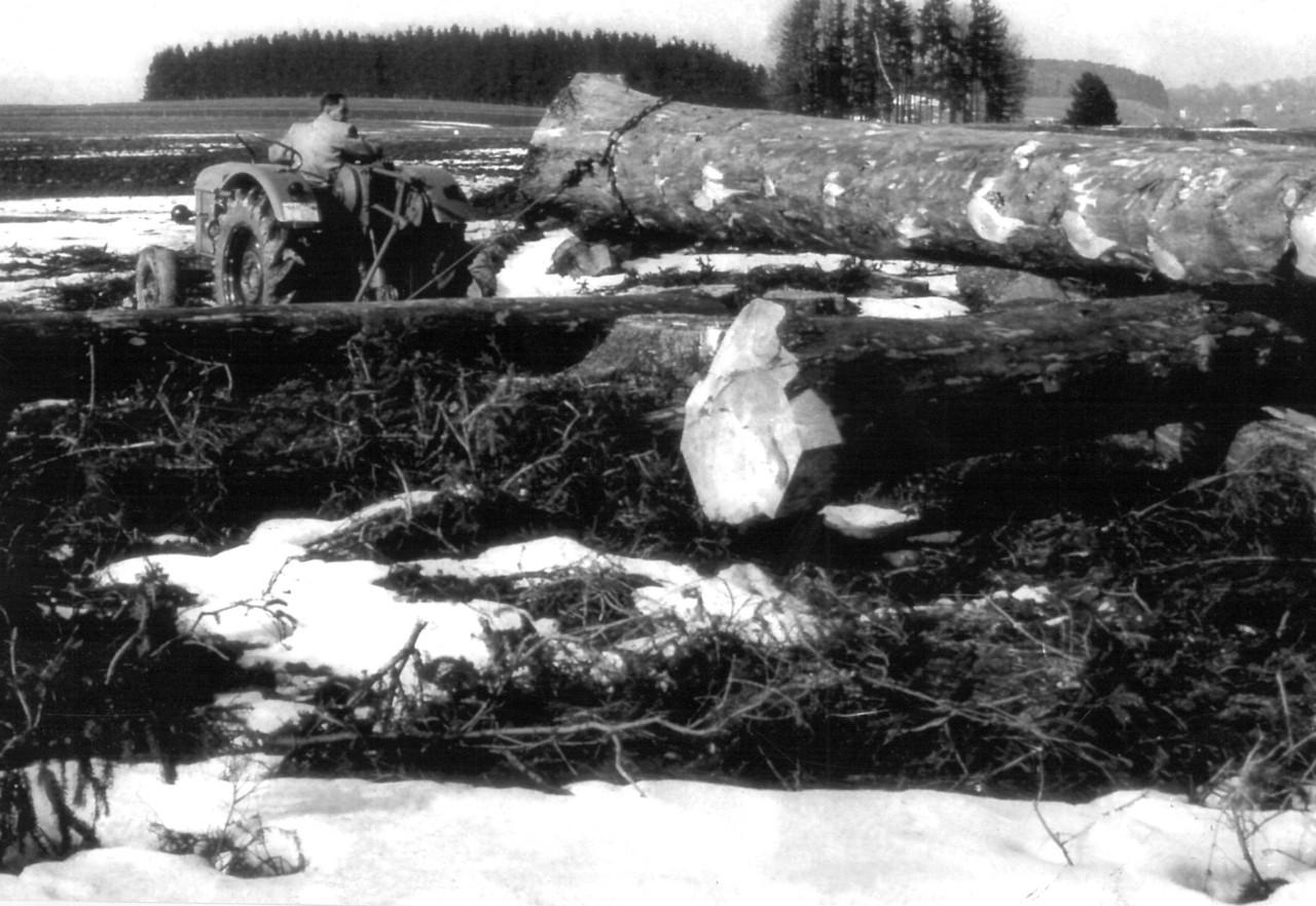 [Deutz] trattore Deutz D 40.1 S durante i lavori forestali