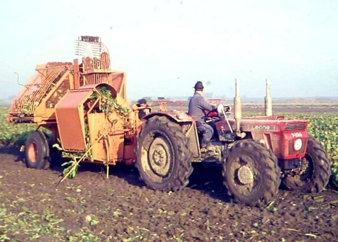 [SAME] trattore Leone al lavoro durante la raccolta della barbabietola in Olanda