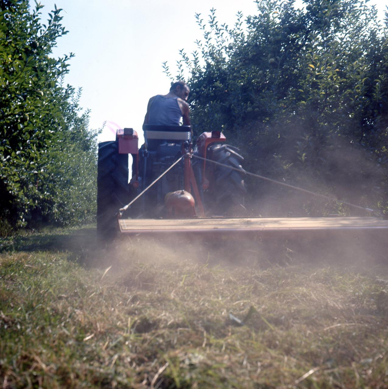 [SAME] trattore Minitauro al lavoro con barra falciante in un frutteto