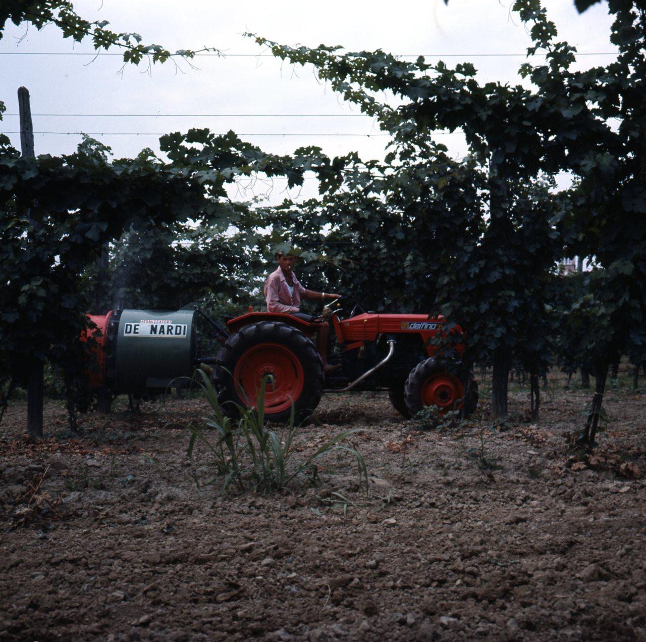 [SAME] Delfino 35 4RM frutteto presso Az. Boalto di La Salute di Livenza (VE), 10/7/1972