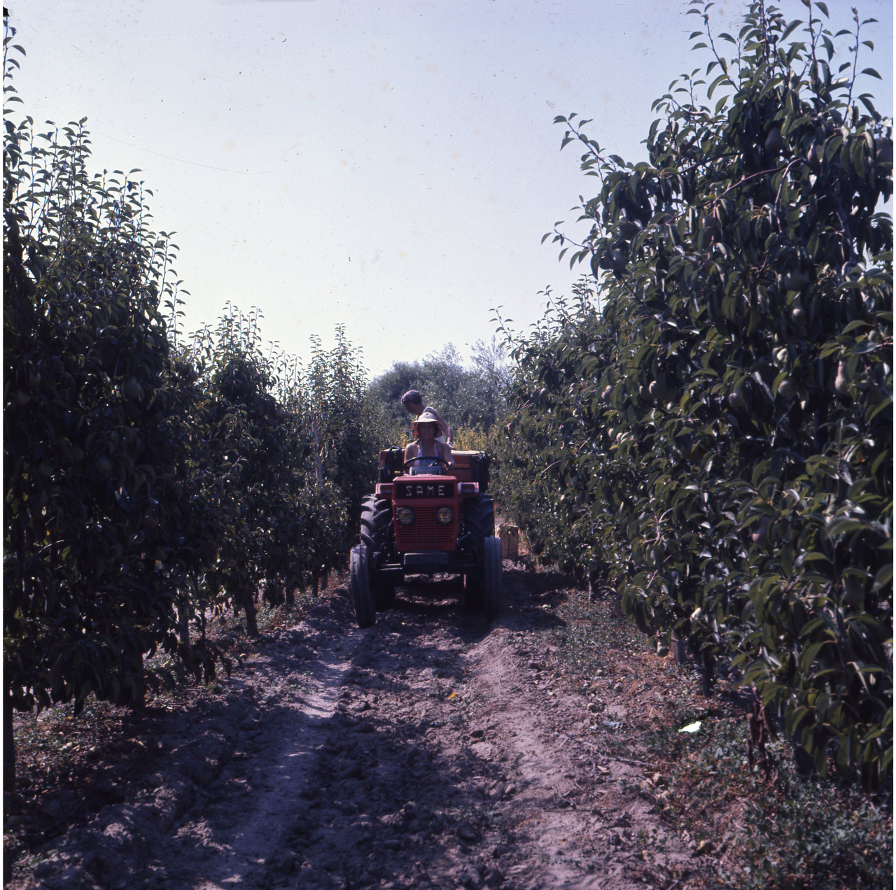 [SAME] trattore Condor 55 al lavoro tra i filari