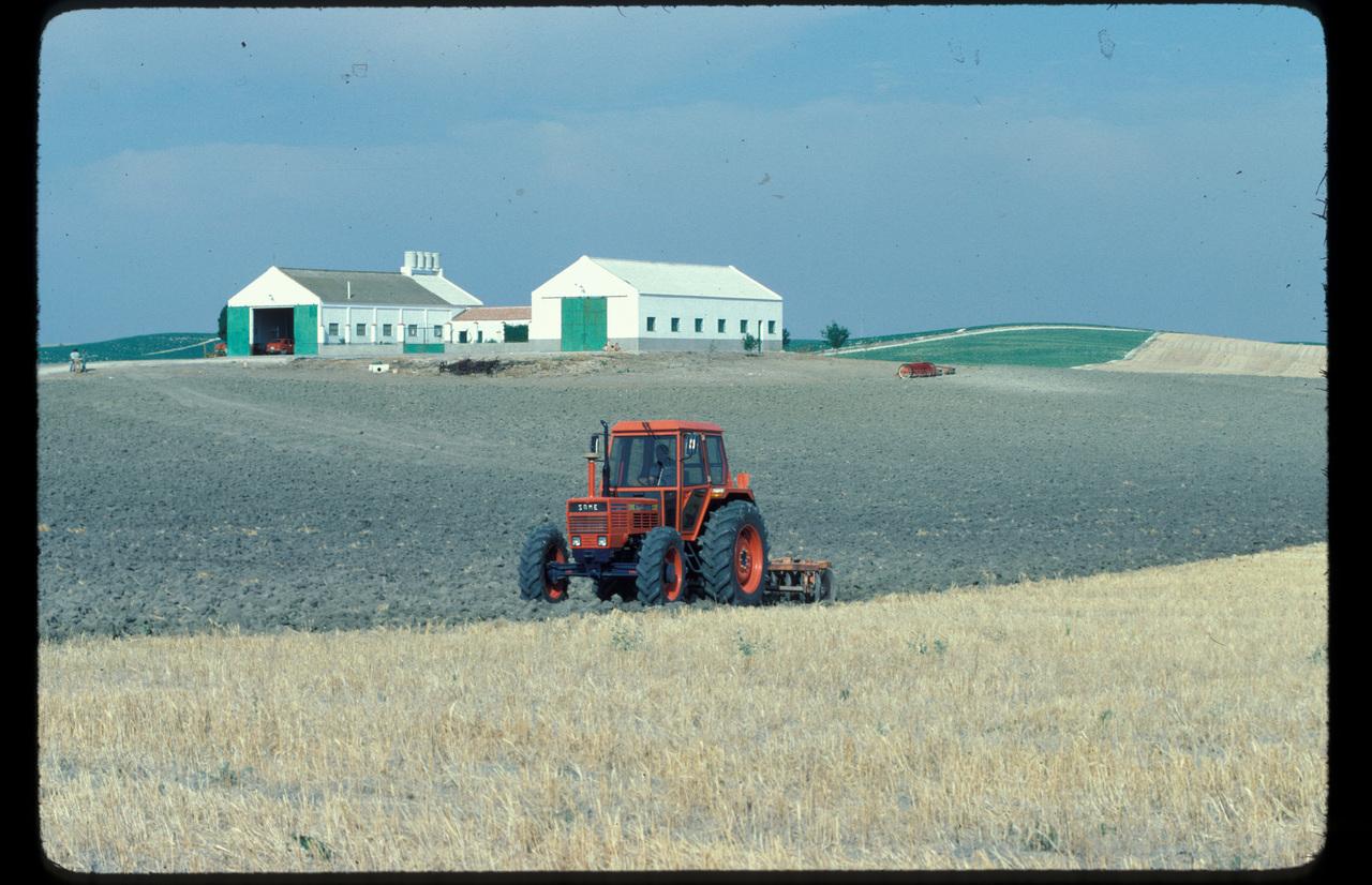 [SAME] trattore Buffalo 130 in mezzo a una mandria di cavalli e al lavoro con erpice