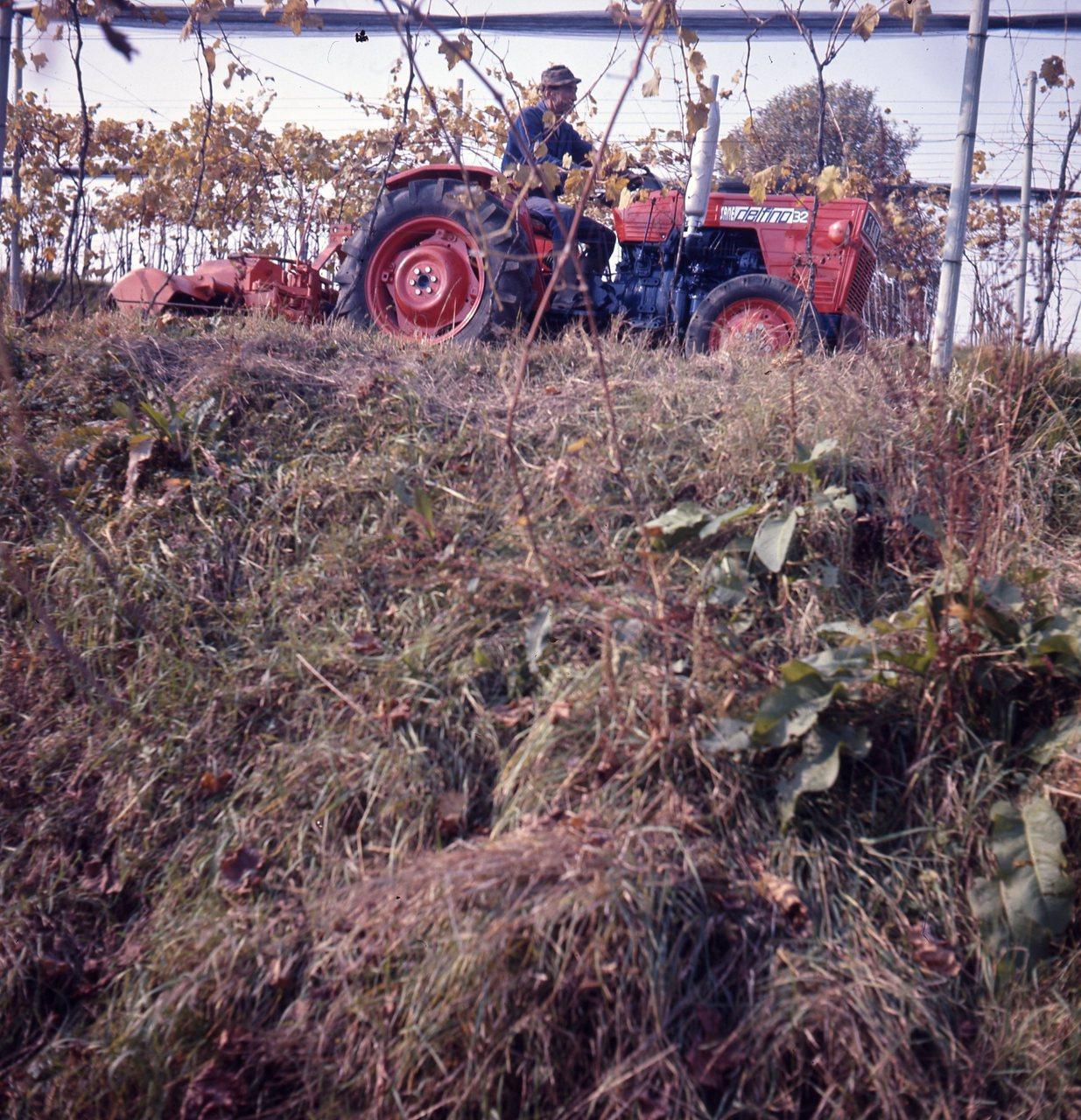 [SAME] Delfino 32 c/o az. Barcella - Brusaporto dic. 1971